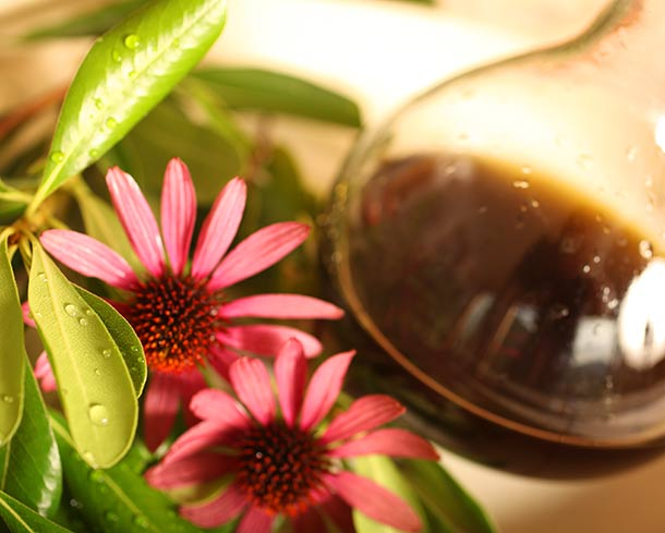 Picture of Echinacea on a table with a glass with tincture